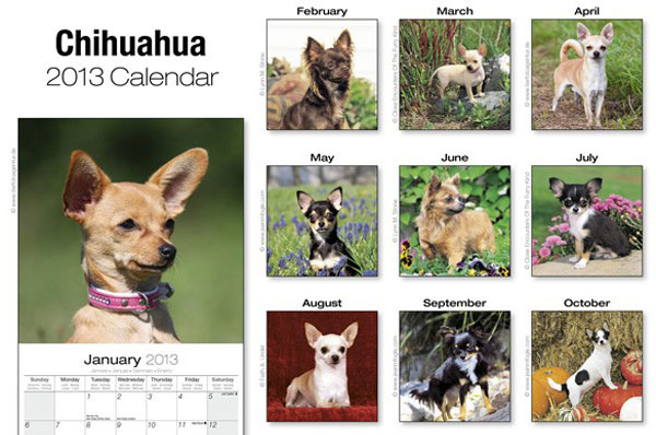 your chihuahua's picture will be featured for the month of october!