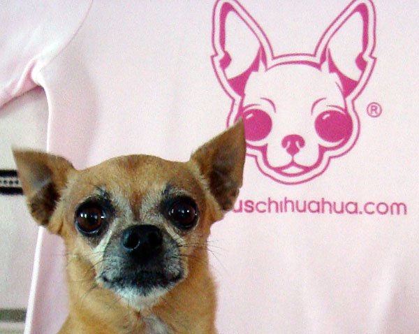i'm the famous chihuahua that started it all!