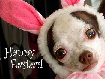 chihuahua-easter-bunny.jpg