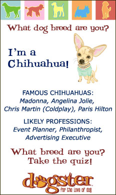 are you a chihuahua? take the dogster quiz