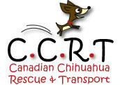 canadian chihuahua rescue and transport