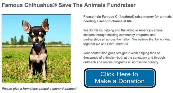 Famous Chihuahua Save The Animals Fundraiser