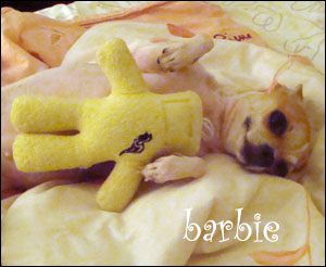 barbie the chihuahua