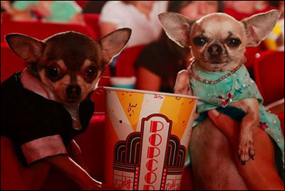 Beverly hills chihuahua movie a farce famous chihuahua for Best farcical movies