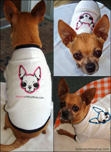 keep your chihuahua warm in a fabulous famouschihuahua.com doggie t-shirt!