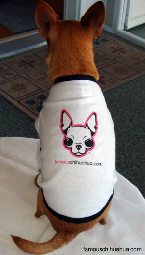 a chihuahua shirt, the perfect gift!