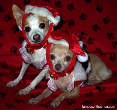 tequila and chico, santa's little helpers