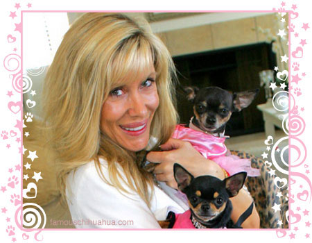 minx and her famous chihuahuas, tinkerbell and paris hilton
