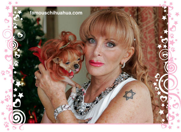 heiress gail posner and her fabulous famous chihuahua conchita