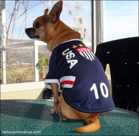 teaka the famous chihuahua models team usa soccer jersey