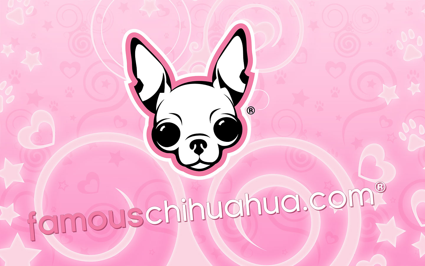 download free famous chihuahua wallpaper