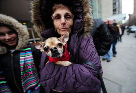 new yorkers come together for chihuahua rescue operation