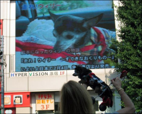 wheely willy gets a glimpse of himself on the jumbo tron on the streets of tokyo