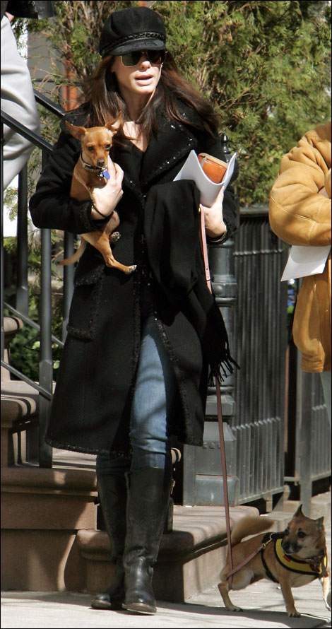 sandra bullock walking her two and three-legged chihuahuas