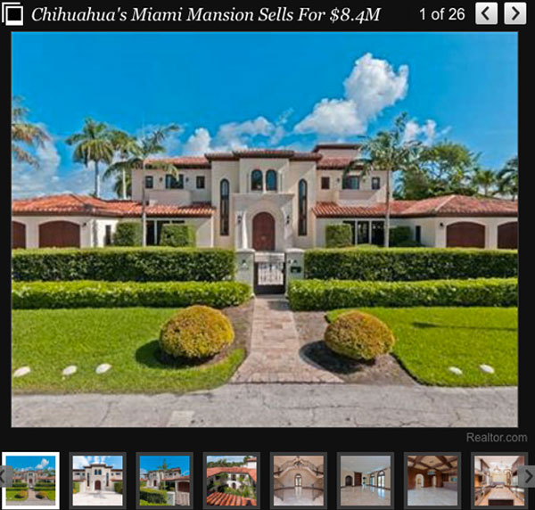 chihuahua's miami mansion sells for $8.4 million!