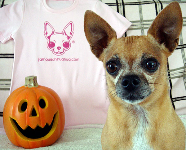what are you waiting for? make your chihuahua famous today!