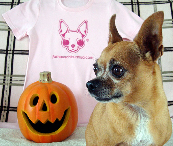 happy howl-o-ween from teaka the famous chihuahua!
