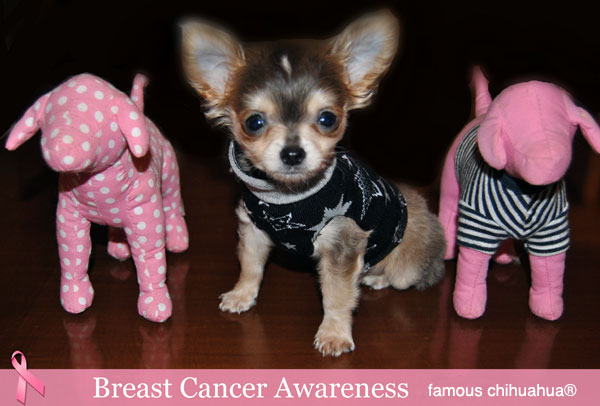 click on petey the chihuahua to give a free mammogram!