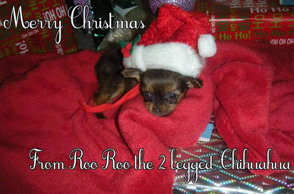 thank you santa for the gift of life! mommy says i'm precious!