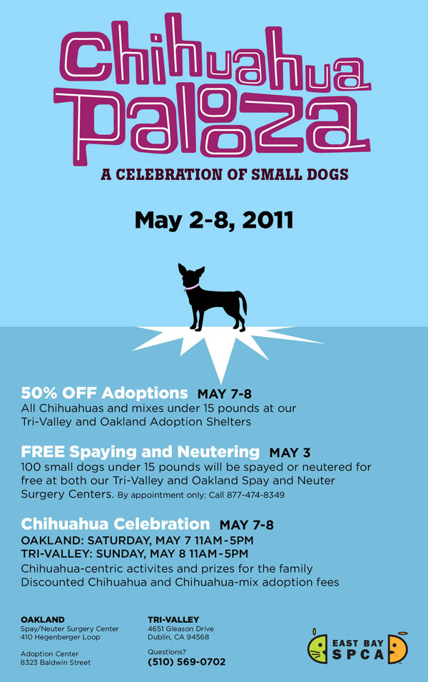 come and join in on the chihuahua palooza celebrations!