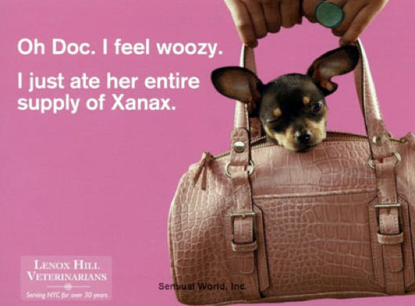 chihuahua on xantax?