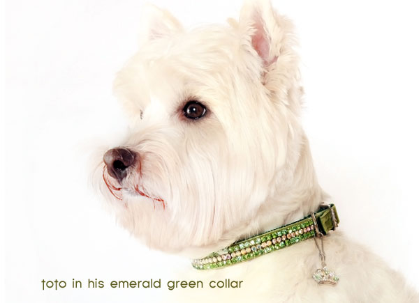 your chihuahua will look just as dazzling as toto does in their own wizard of oz dog collar!