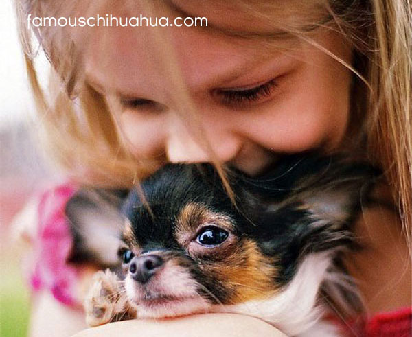 cutest famous chihuahua your top 10 contenders famous chihuahua