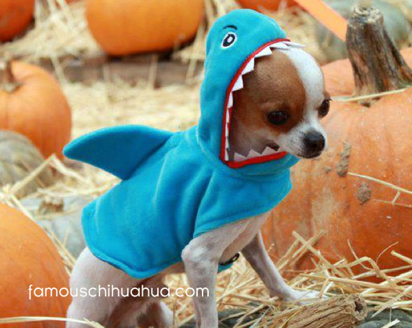chihuahua shark! & and our 2011 halloween costume contest winner is chihuahua frog ...