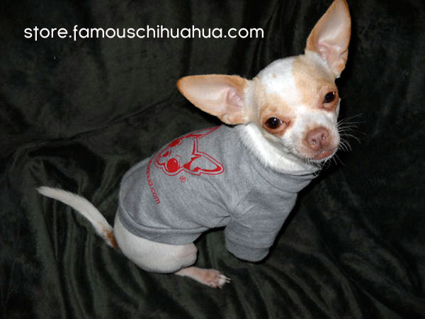 pablo models our famous chihuahua dog shirt!