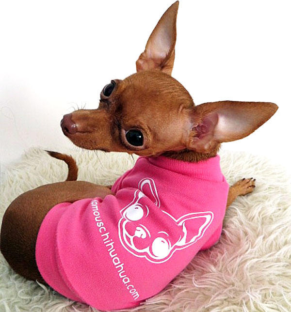 famous chihuahua dog shirt