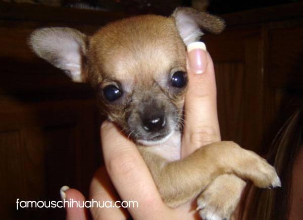 asti as a puppy, look at that face!