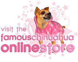 click here! visit the famous chihuahua clothes store!