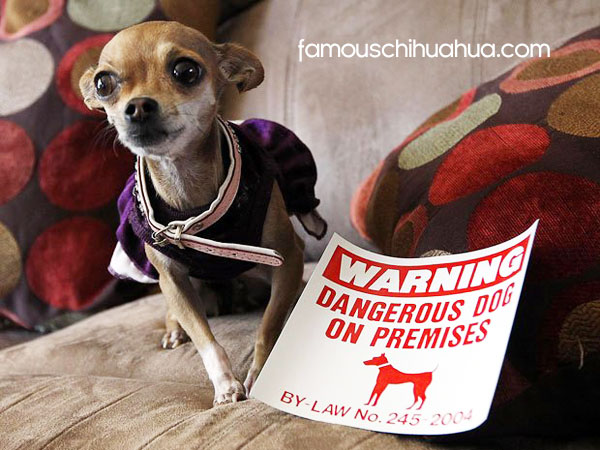 warning, dangerous dog!