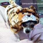 joey the tiger!