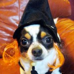 oreo the witch!