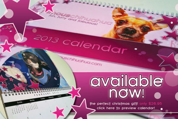 click here to preview the 2013 famous chihuahua calendar!