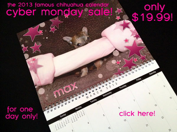 cyber monday sale! the famous chihuahua calendar only 19.99!