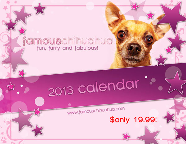 preview the famous chihuahua calendar