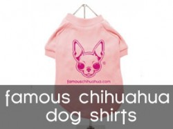 famous chihuahua dog shirts!