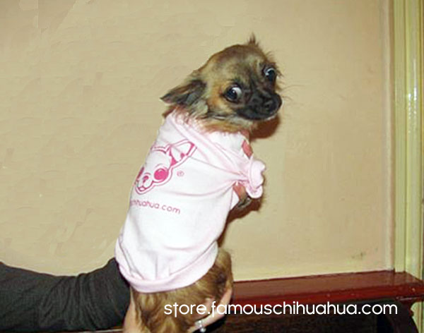 famous chihuahua dog shirts