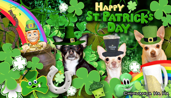chihuahuas dressed up for st patricks day