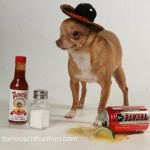 one eye chihuahua in sombrero