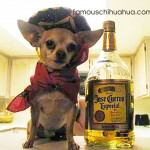 chihuahua tequila bottle