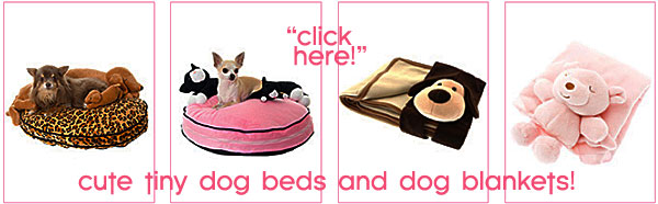 cute beds for toy dogs