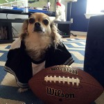 chihuahua football player