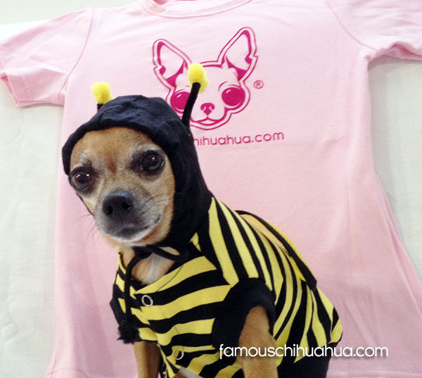 halloween chihuahua bumble bee