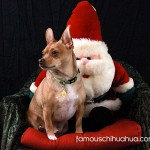 chihuahua on santa