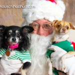 chihuahuas on santas lap