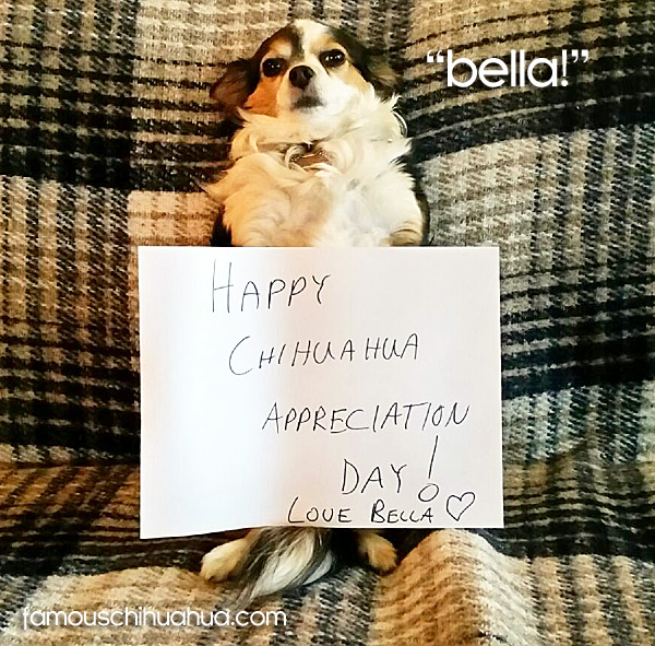 happy chihuahua apprciation day! love bella!