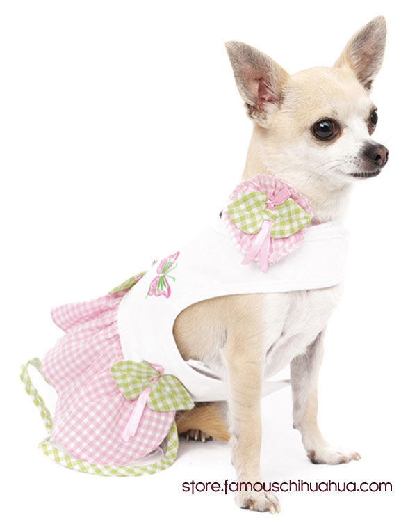 chihuahua-dress